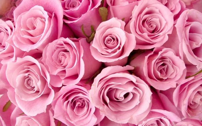 0_1633ff_baa171ff_orig-width1440-height900-border0-titleroses-bouquet-tumblr-wallpaper-2